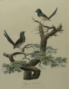 Birds, Australia, Original prints